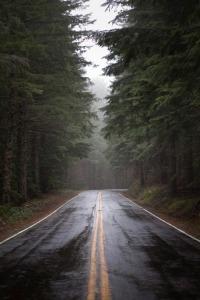 autumn road rain